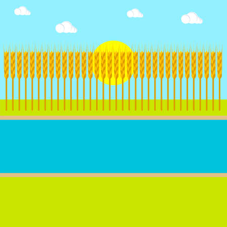 Wheat field background with river and sun. Summer landscape. Simple style. Vector illustration. Clipart and drawing.