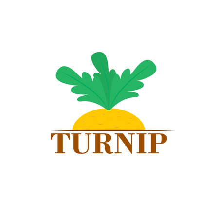Yellow turnip vegetable. Vector isolated illustration. Clipart and drawing.