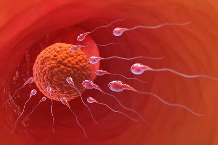 Spermatazoids, Egg, Ovule, natural fertilization. 3d illustration on a medical theme