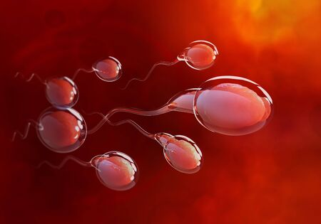 Spermatozoa rush to victory. Movement through the fallopian tubes. 3D illustration on medical research