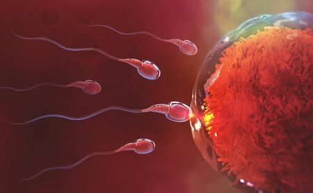Sperm and egg cell. Natural fertilization. 3d illustration on red background Archivio Fotografico