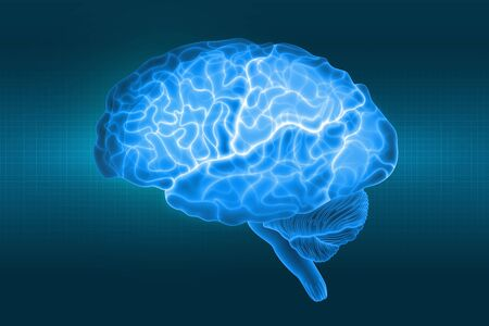Human brain is a side view in X-rays. Parts of the brain. 3d illustration in blue light on a dark background Archivio Fotografico