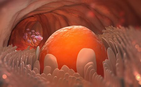 Egg cell leaves the ovary. Ovulation. Natural fertilization. 3D illustration on medical topics Banque d'images