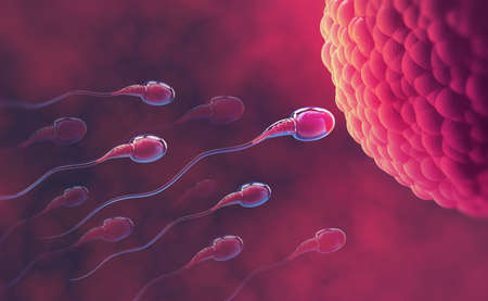 Sperm and egg cell. Under the microscope. Embryology. Natural fertilization. 3d illustration on red background