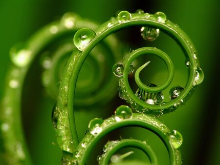 Spiral plant on green background