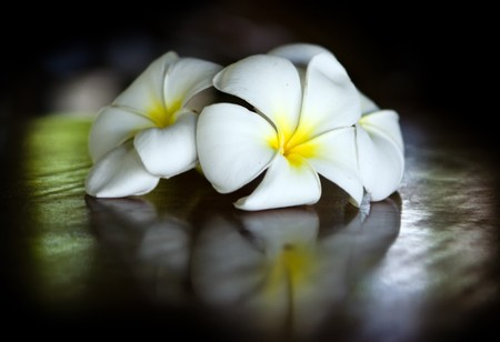 Three temple flowers lying on the table Stock Photo - 4127275