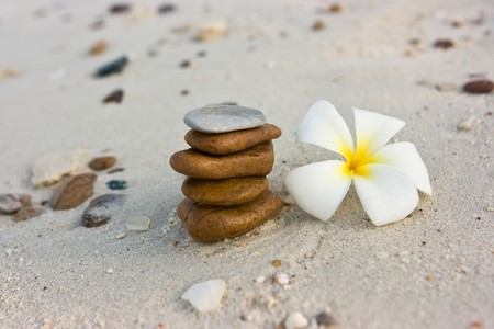 Temple tree flowers lying on the beach photo