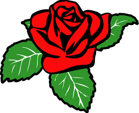 Vector illustrated rose on white background