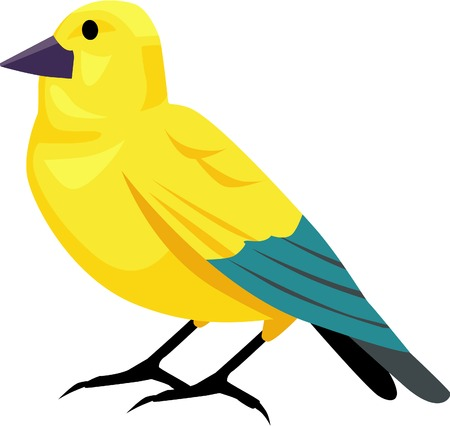 Yellow canary bird vector illustrated