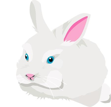 Cute white rabbit sitting