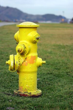 Yellow water fire hydrant standing on grass