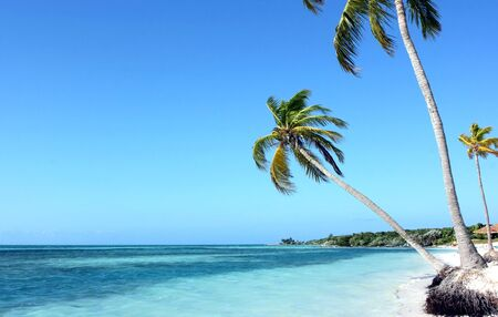 Three palms standing at the ocean on the Bahamas island Stock Photo