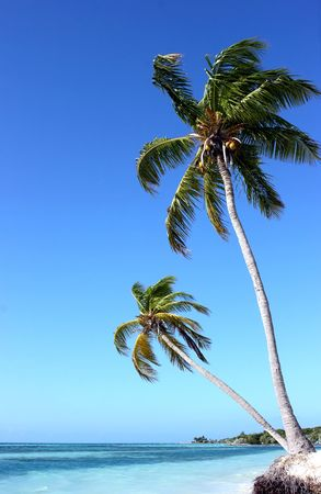 Palm trees standing on the island at the ocean Stock Photo