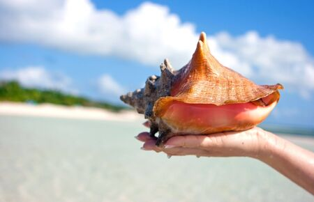Sea shell lying on a womans hand with clouds  Stock Photo