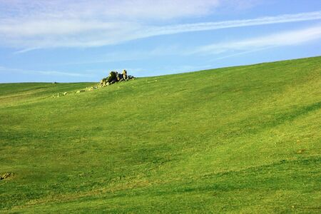Nature background with green grass field and blue sky