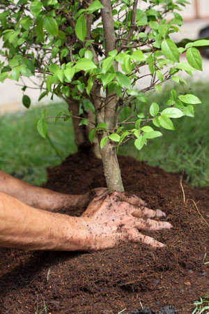 soil conservation: Protect the environment by planting forests. Stock Photo