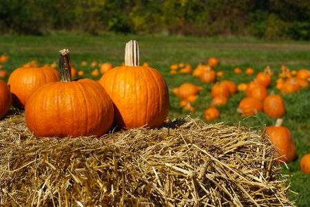 Orange pumpkins on top of dried hay bales with pumpkin patch on green field in the background. photo