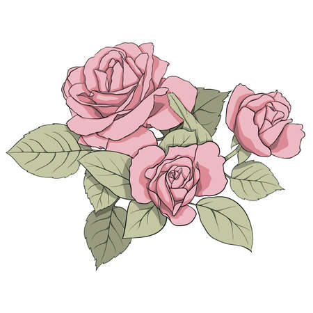 omposition of delicate pink roses and green leaves. Illustration for creating cards, decoration, decoration, prints, wedding invitations, etc. Flower illustration Фото со стока