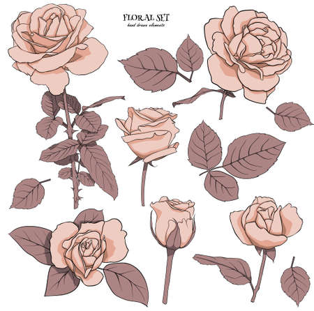 Floral set of delicate roses with leaves. Set for drawing up flower compositions for decoration, design of cards, textile, paper, prints, fabric, etc. Flower illustration