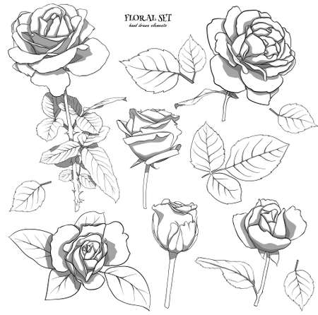 Floral set of delicate roses with leaves. A set of monochrome drawings for floral compositions for decoration, design postcards, textiles, paper, prints, fabric, etc. Flower illustration