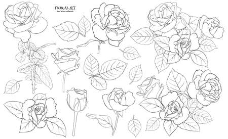 Floral set of delicate roses with leaves. A set of contour drawings for drawing up flower compositions for decoration, design of cards, textile, paper, prints, fabric, etc. Flower illustration Фото со стока