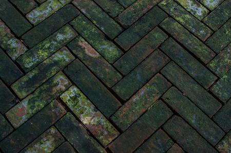 brick floor: Musgo piso de ladrillo rojo.