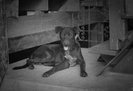 ojos tristes: Perros abandonados con ojos tristes. Foto de archivo