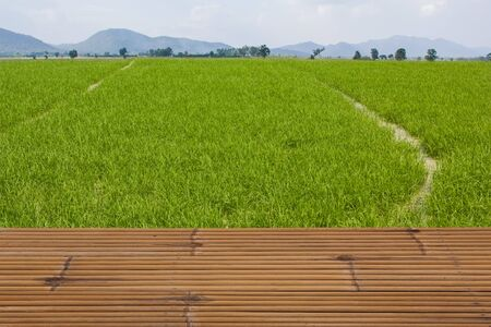 rice field: Rice field with bamboo tables, Thailand.
