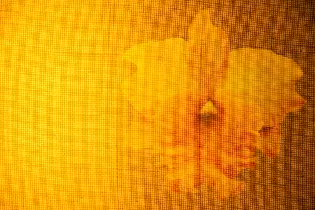 Flowers on the surface of fabrics and light yellow, Overlay the images of flowers and exotic colors.