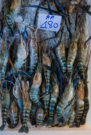 macrobrachium: Giant freshwater prawn for sale at fresh food market in Samut Sakhon,Thailand.