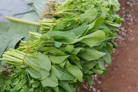 중국어 양배추, 쵸이, 중국 야채, 태국 시장의 일종.