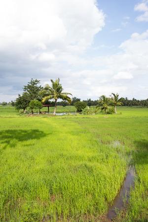 논, 코코넛 나무, 피난처에 대한 전망대, 비 구름은 단순한 시골로 보이는 자연, 농업, 전통 아시아 국가를 형성합니다.