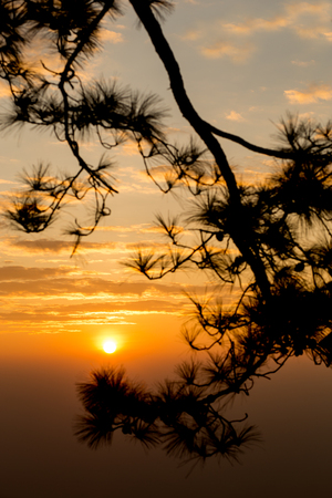 Golden light at sunrise with the silhouette of branches of pine trees, at Phu Kradueng National Park,Loei Province,Thailand. 스톡 콘텐츠