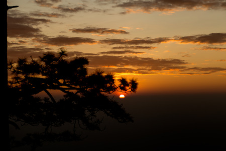 Golden light at sunrise with the silhouette of branches of pine trees, at Phu Kradueng National Park,Loei Province,Thailand. Standard-Bild