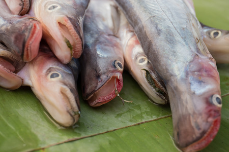 Fish sold in the market, Luang Prabang market, The Lao People's Democratic Republic. 스톡 콘텐츠 - 111066192