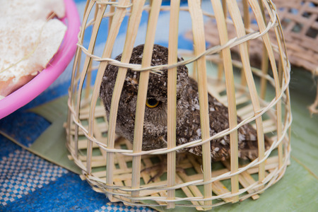 Owl in a cage sold in the market, Luang Prabang market, The Lao People's Democratic Republic. 스톡 콘텐츠 - 111066204