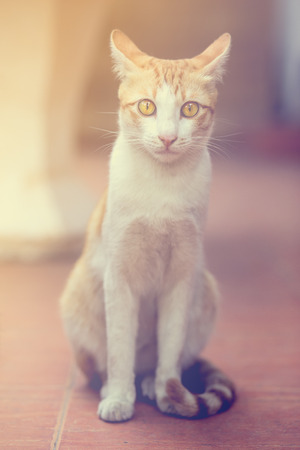 Portrait of a cat looking at camera, vintage style. Standard-Bild