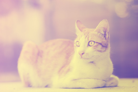 Portrait of a cat looking to the right, vintage style. Standard-Bild