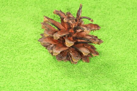 Dry pine cone closeup on a green background  Stock Photo