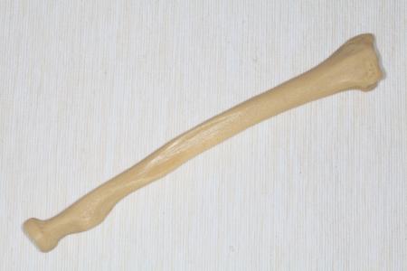 Radiation bone closeup on a light background Stock Photo - 18957879