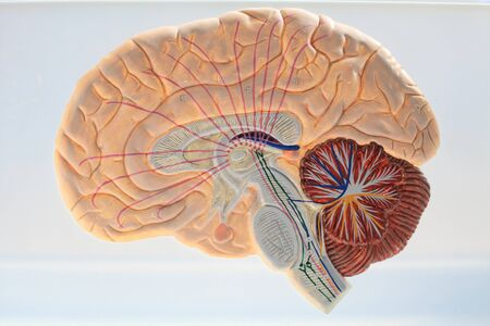 Scheme of the ascending ways brain closeup at the anatomy of the drug Stock Photo - 19941302