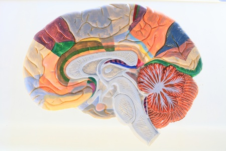 Anatomical drug brain closeup, made of colored ink  Stock Photo - 19941297