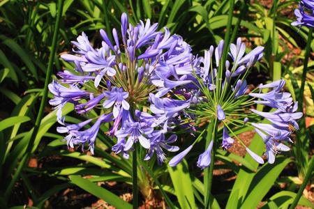 Blue flowers closeup, illuminated bright July sun in the park.