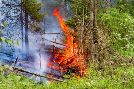 Vuur in het bos van de zomer. Onachtzaam omgaan met vuur. Zelfontbranding.