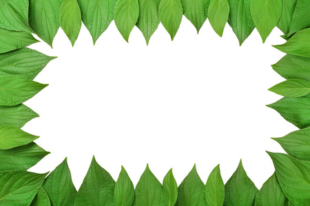 Frame made of green leaves isolated on white