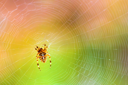 A spider on a spiderweb in the wild on a blurred colored background.