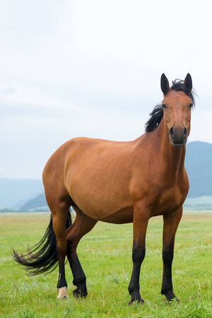 Horse in the meadow. Livestock in the countryside.