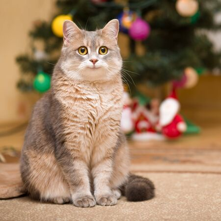 Smiling cat on a blurry background with a Christmas tree and a luminous garland Фото со стока