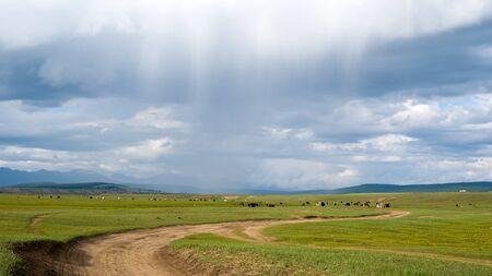 Mongolian grassland with grazing livestock in the rain. Фото со стока