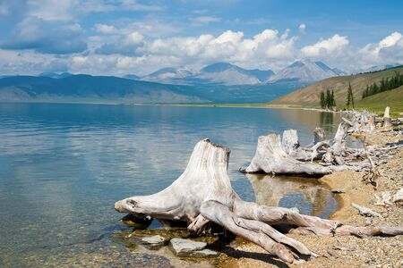 Stumps on the shore of Lake Hovsgol. In the distance is the Eastern Sayan ridge. Mongolia.